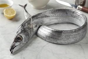 Beltfish